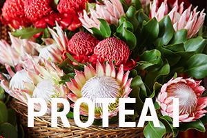 Protea I titel